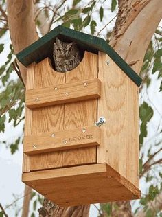 Good looking Owl House accommodates screech and saw-whet owls, even hosts kestrels and flickers. Handcrafted of durable cedar with hunter green roof, it offers ample room for mom and nestlings. Lockin crafts for 10 year olds Screech Owl House Bird House Plans, Bird House Kits, Owl House, Dyi Bird House, Bird House Feeder, Bird Feeders, Owl Box, Owl Nest Box, Screech Owl