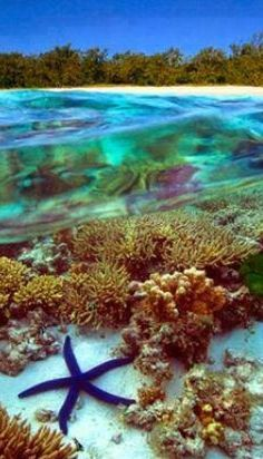 #Great_Barrier_Reef #Marine_Park,  #Australia http://en.directrooms.com/hotels/country/5-43/