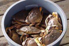 Есть такая чудесная штука, называется crab bucket theory — «теория ведра с крабами». Если вкратце, она гласит, что крабы — настолько глупые животные, что по одиночке каждый из них легко бы выбрался из ведра, но когда один из них пытается из ведра выбраться, его же сородичи цепляются за него и затягивают обратно.  Когда человек пытается бросить курить, а дружки говорят «всё равно не получится» и протягивают сигарету — crab bucket. Когда ты получаешь второе высшее образование, а коллеги громко…