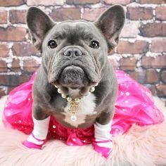 Bulldog Rescue, Rescue Dogs, Cute French Bulldog, French Bulldogs, English Bull, Terrier Mix, Happy Dogs, Pugs, Cute Dogs