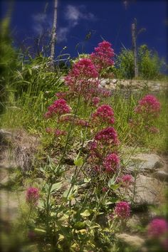 Flowers On A Slope https://madipix.com/flowers-on-a-slope/