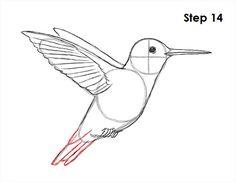 Las 44 Mejores Imágenes De Colibríes Colibri Colibri