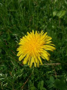 Hey! I'm a flower too :(