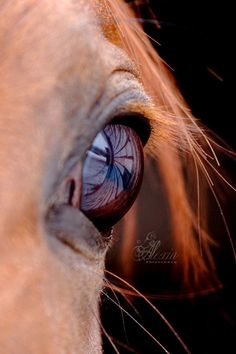 .Looking into a horses eye you can see into it's soul. Such a sweet, beautiful spirit. One of Gods most precious creations!! Thank you God!!