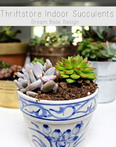 Thrift Store Indoor Succulents. Tips and tricks for turning a thrift store find in to the perfect pot, and tips for keeping the succulents alive, all on dreambookdesign.com