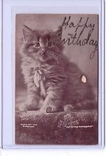 VINTAGE REAL PHOTO PET OF THE HOUSEHOLD CAT KITTEN CR 1900 BYCE BULLARD POSTCARD