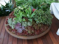 Many of the show gardens this year had a naturalistic style to them, cottage garden plants and style was very much a key trend. As such, ex...