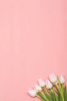New wallpaper vintage flower backgrounds 40 Ideas Pastel Color Background, Flower Background Wallpaper, Flower Phone Wallpaper, Wallpaper Backgrounds, Floral Wallpapers, Vintage Wallpapers, Beauty Background, Rose Wallpaper, Disney Wallpaper