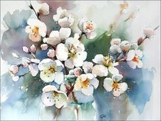 Cherry blossoms by aquarelle