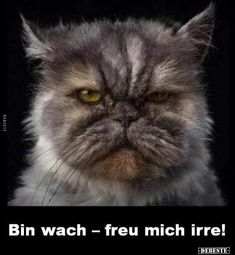 Animals And Pets, Cute Animals, Cool Pictures, Funny Pictures, Monday Pictures, Animal Pictures, Tomorrow Is Monday, Cat Photography, Commercial Photography