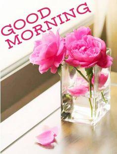 Good Morning Gif Images, Good Morning Beautiful Pictures, Good Morning Images Flowers, Good Morning Cards, Good Morning Prayer, Good Morning Funny, Good Morning Picture, Good Morning Messages, Good Morning Greetings