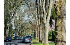 Vancouver city project aims to put a value on trees