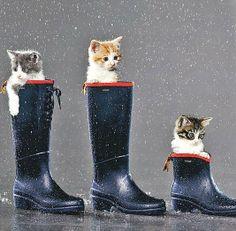 (圖) 外面天氣陰陰的...是不是又要下雨看貓兒們的表情就知道,穿上...