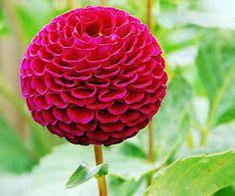 Google Image Result for http://www.golden-gate-park.com/wp-content/uploads/2011/03/conservatory_of_flowers3.jpg