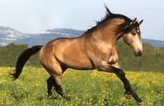 Cavalos formidáveis (5)