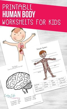 Try these cool human body worksheets for kids. These science worksheets will introduce the human body organs and their functions to your kids in an engaging and fun way. Human body activities for each of the human body systems that your kids can enjoy. Human Body Lesson, Human Body Science, Human Body Activities, Human Body Unit, Human Body Systems, Health Activities, Kindergarten Science Activities, Homeschool Science Curriculum, Kindergarten Special Education