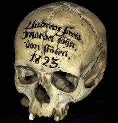 Skull Reference, Real Skull, Human Skull, Vanitas, Skull And Bones, Dark Beauty, Skull Art, Macabre, Art Day