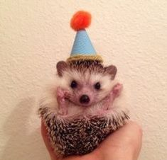 17 Things To Do While People Are Singing Happy Birthday To You