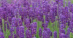 Blog, Tips, Plants, Blogging, Flora, Plant, Planting