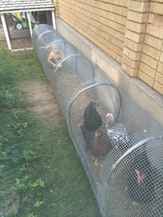 Raising chickens in your backyard or garden is great idea to get the freshest eggs and healthy meat. It seems to be a good idea to allow chickens to free range, but problems can arise, chickens may destroy the flower beds and vegetable patches in your bac Chicken Coup, Chicken Runs, Chicken Wire, Simple Chicken Coop, Mobile Chicken Coop, Small Chicken Coops, Cheap Chicken Coops, Chicken Feeders, Clean Chicken