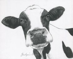 ORIGINAL Cow Art Charcoal Drawing 11x14 Holstein