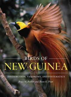 New Guinea, the largest tropical island, supports a spectacular bird fauna characterized by cassowaries, megapodes, pigeons, parrots, kingfishers, and owlet-nightjars, as well as the iconic birds of p