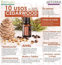 Resultado de imagen para doterra gripa Doterra Cedarwood, My Doterra, Doterra Blends, Cedarwood Essential Oil, Doterra Essential Oils, Essential Oil Blends, Young Living Oils, Young Living Essential Oils, Melaleuca
