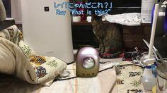 宇宙船型キャリーリュックシーンのみ再アップ【可愛い子猫のおもしろい動画】