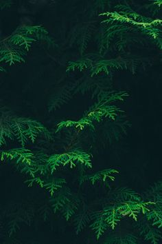 Free Stock Images Ecosystem - Forest - Green - Jungle - Leaf - Nature - Old Growth Forest - Organism - Tropical And Subtropical Coniferous Forests - Vegetation - Tree Wallpaper Iphone, Green Wallpaper, Nature Wallpaper, Pattern Wallpaper, Leaves Wallpaper, Trendy Wallpaper, Mobile Wallpaper, Iphone Wallpapers, Nature Plants