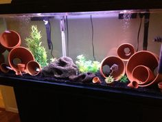 My first cichlid tank. I wanted to do a easy setup so I decided to use clay pots for my first setup.