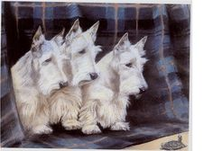Three Curious White Scottie Dog s And A Turtle by NoCrybabyDoGs, $17.20