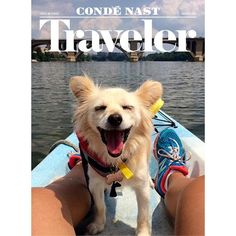 It's out! Our first #August edition of #TravelingPets: meet @mmarthie's Khaleesi enjoying her first boat ride on the #PotamacRiver.