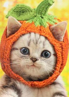Halloween Greeting Card - Kitten in Knit Pumpkin Hat
