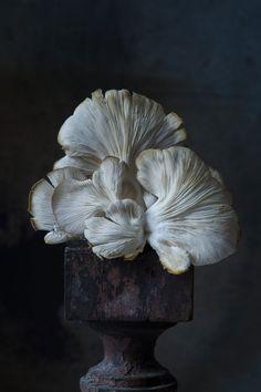 Lynn Karlin Food Photography - On a pedestal