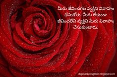 You may think again if you need ex boyfriend texts? Luckily we have detailed info in our article :) Types Of Flowers, Red Flowers, Red Roses, Great Love, What Is Love, Love Quotes In Telugu, Unconditional Love Quotes, Heart Touching Love Quotes, Crush Love