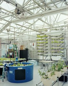 agritecture: NYSUNWORKS brings hydroponic, aeroponic, and aquaponic farming into schools through the construction of rooftop greenhouses. robstephenson: PS 333 Rooftop Greenhouse, interior 2011. Part of myurban agricultureseries.