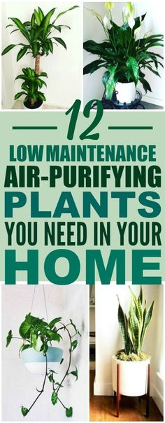 These 12 air purifying plants are THE BEST! I'm so happy I found these AMAZING home hacks! Now I have some great ideas for low maintenance air purifying plants for home decor! Low Maintenance Landscaping, Low Maintenance Plants, Landscaping Tips, Tall Plants, Hanging Plants, Potted Plants, Plant Needs, Air Purifier, Houseplants