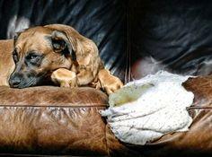 Wie lange kann man Hunde alleine lassen?