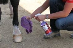 CONTEST!!!  Enter your best tip for removing manure stains and you could win prizes from Shapley's!   proequinegrooms.com