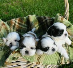 Basket of happiness. Puppy basket.