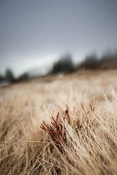 #nature #dark #cold #silence #landscapes