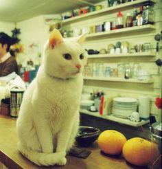 カウンターに登る猫 #cat on Twitpic