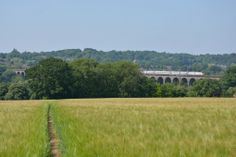 Viaduct, Hertfordshire Vineyard, Plants, Photography, Outdoor, Outdoors, Photograph, Vine Yard, Fotografie, Photoshoot