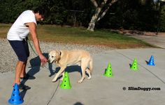 Canine Fitness Equipment: Cones  http://slimdoggy.com/canine-fitness-equipment-cones/