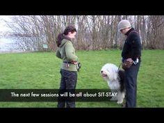 Tiffany (Old English Sheepdog) Training Day 5