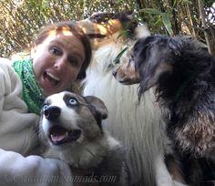 Selfie With Pets: Three Dogs. Cardigan Welsh Corgi Brychwyn, Miniature Long Haired Dachshund Wilhelm & Rough Collie Huxley #DogwoodWeek1 #Dogwood52 Self Portrait Photography Challenge