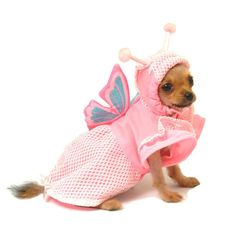 Puppe Love Lady Butterfly Dog Costume