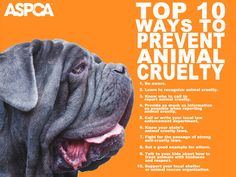 Top 10 Ways to Prevent Animal Cruelty