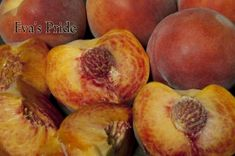 Eva's Pride Peach | Dave Wilson Nursery Delicious, fine flavored peach with very low chilling requirement ripens 2-3 weeks before Mid-Pride. Medium to large-sized yellow freestone -