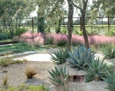 pink muhly and agave